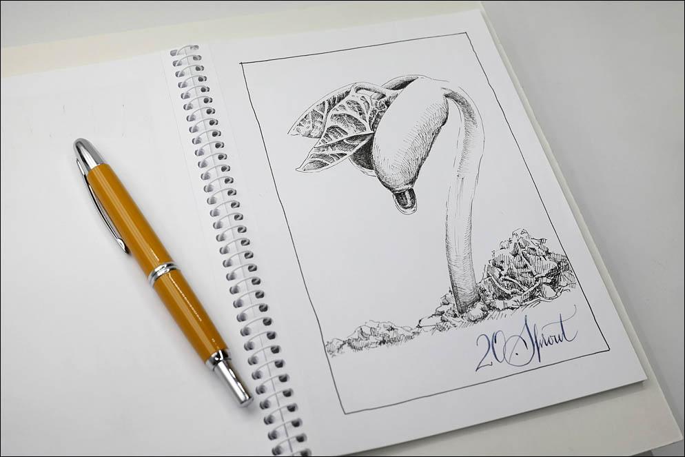 20. Sprout. Inktober2021. Lenskiy.org